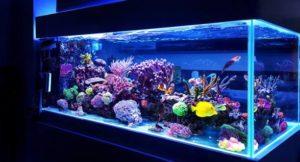 improve water quality in your aquarium tank