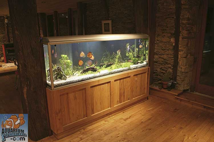 1000 gallon fish tank with best canister filter
